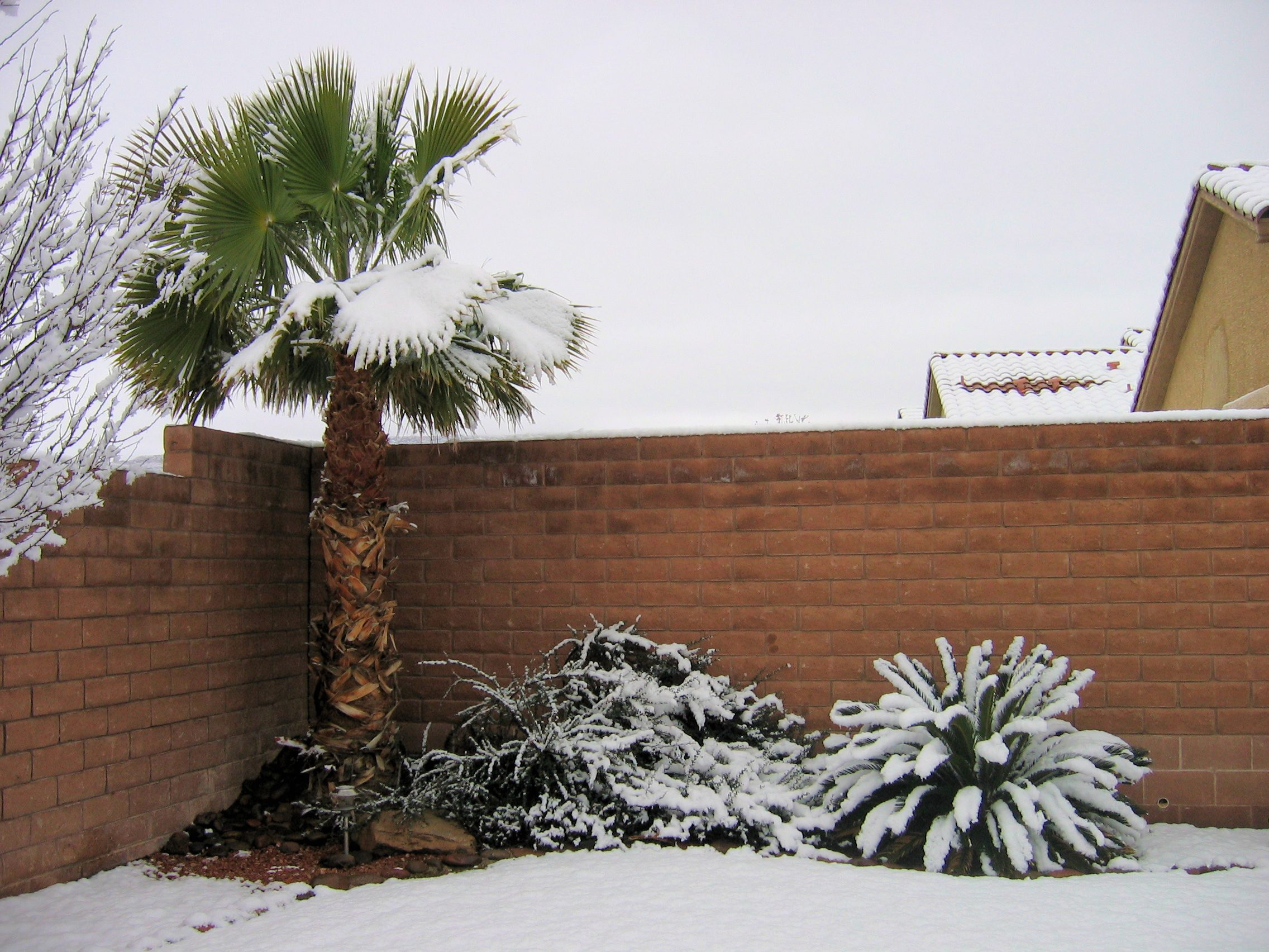 Snow in Las Vegas, January 2011