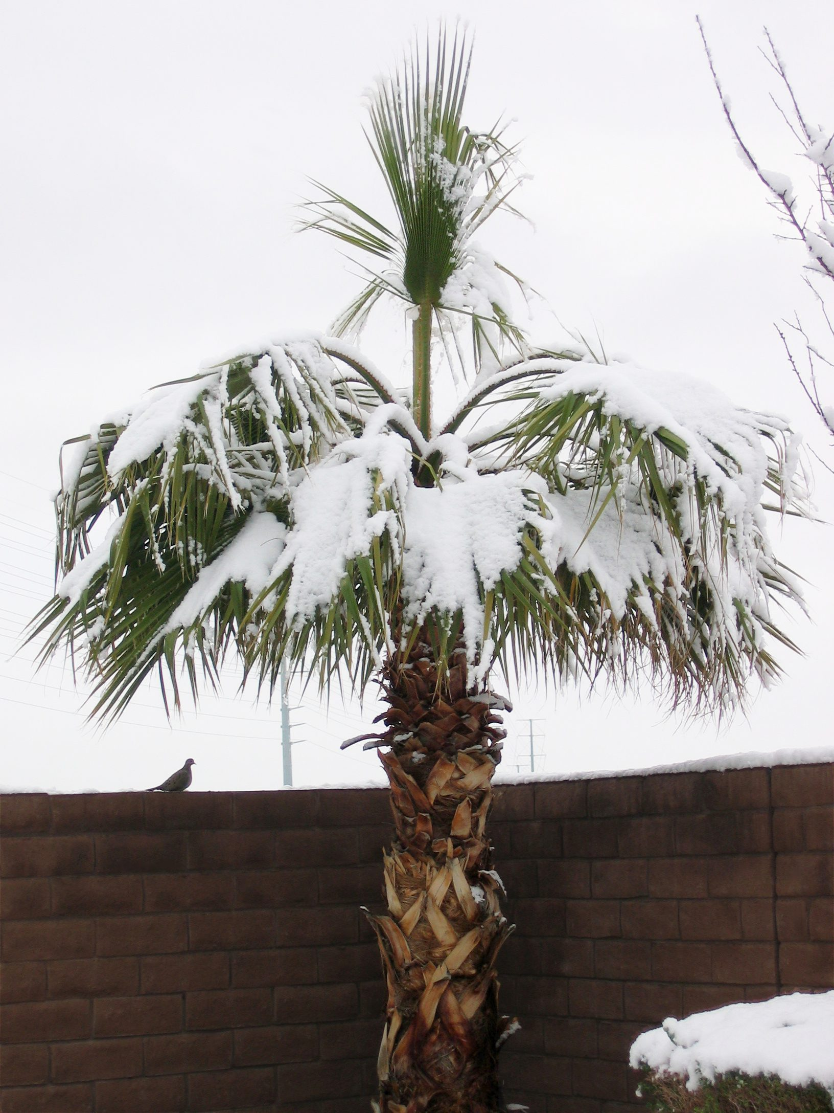 Snow in Las Vegas